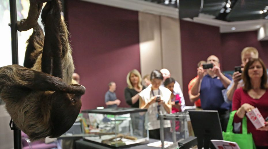 A two-toed sloth, hanging from a wood bar, was a big hit at the event and a part of the Organization for Bat Conservation's display. (Photos by Laura Long and Jessica Ehrler of FCA US Photo Imaging)